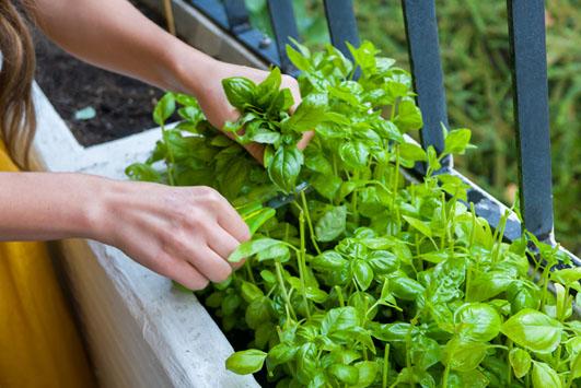 5 dicas para fazer sua própria horta caseira e agroecológica!