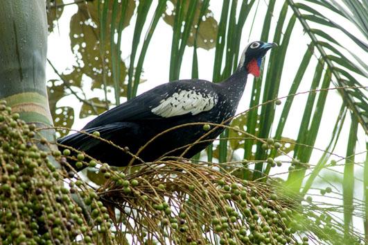 Reserva Salto Morato marca presença na maior feira de observação de aves da América Latina