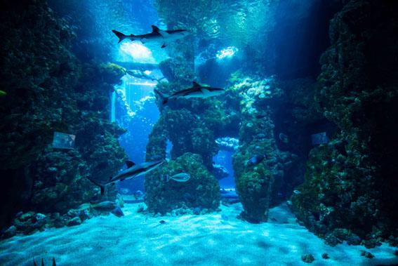 Uma noite no Museu Oceanográfico de Mônaco