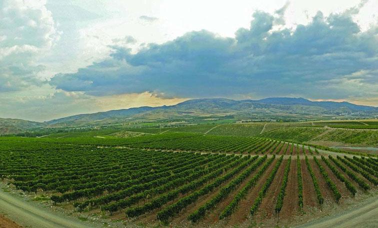 Vinhedos da Turquia: País é o quinto maior na produção de uvas e vinhos
